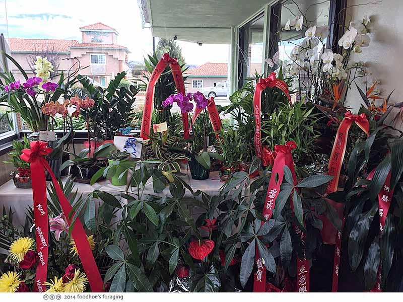 ttp_orchids