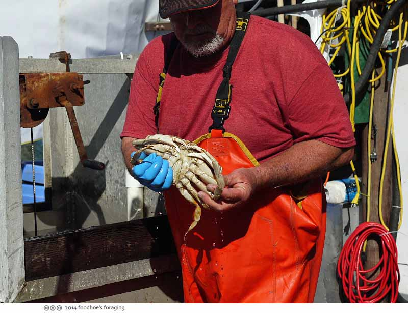 crab_boat_guy