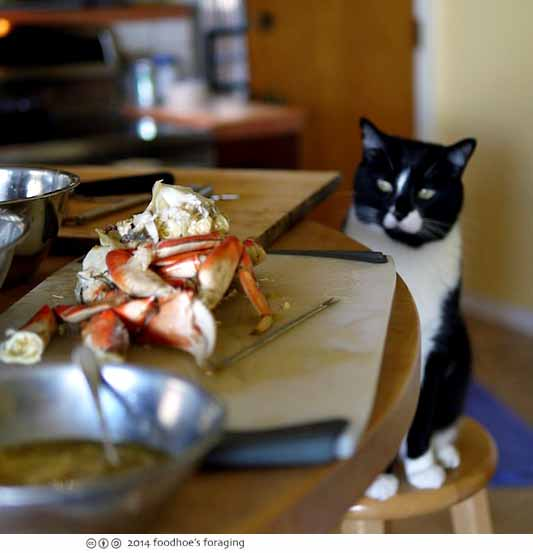 kitty wants crab