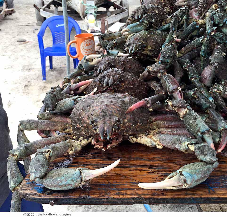 popotla_crabs